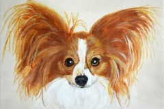 Papillon Spaniel Pet Portrait