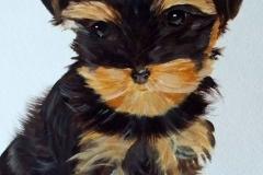 Yorkie Pet Portrait