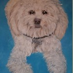 Mixed Poodle Puppy Painting