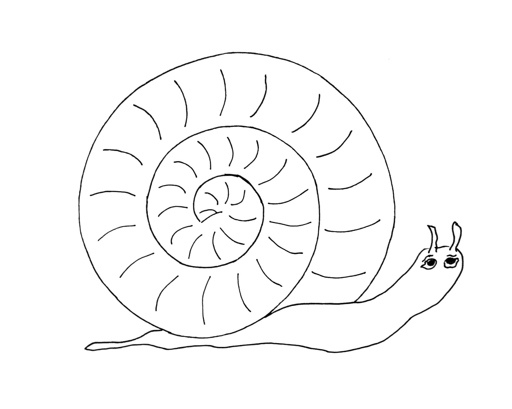 Snail-Pattern