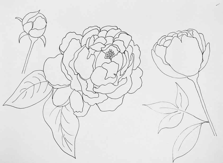 Peony Pattern Download