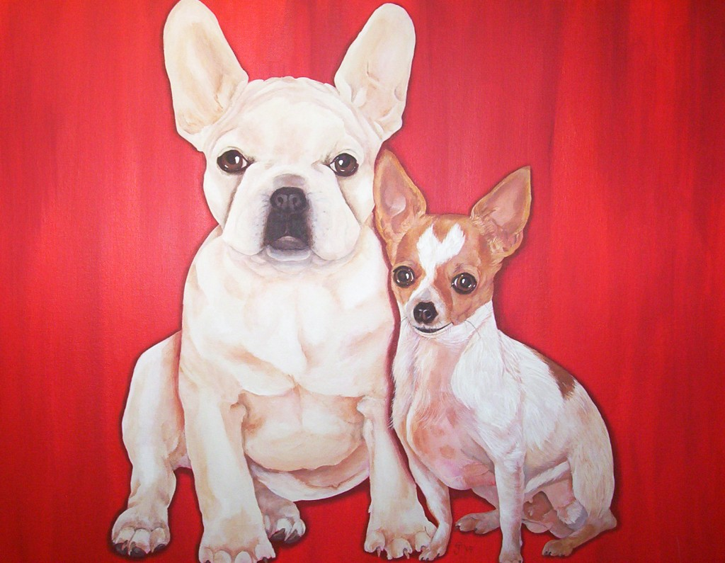 frenchie & chihuahua portrait
