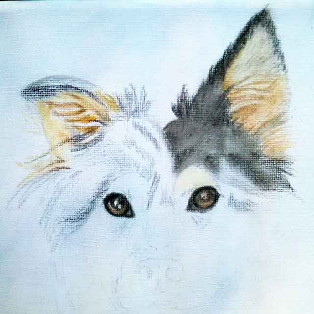 english shepherd portrait