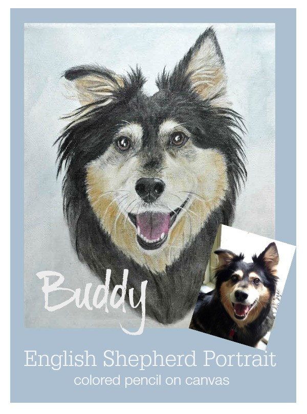 Buddy – English Shepherd Pet Portrait