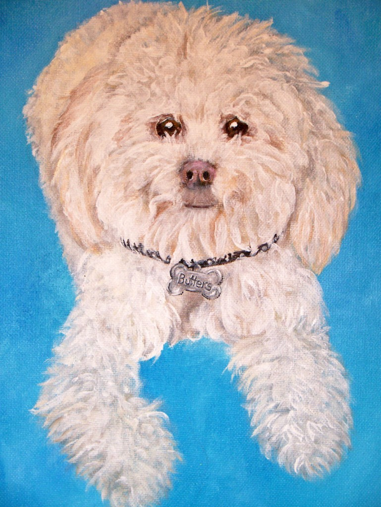 mixed poodle portrait