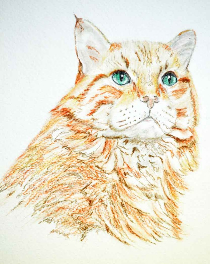 draw-tabby-cat