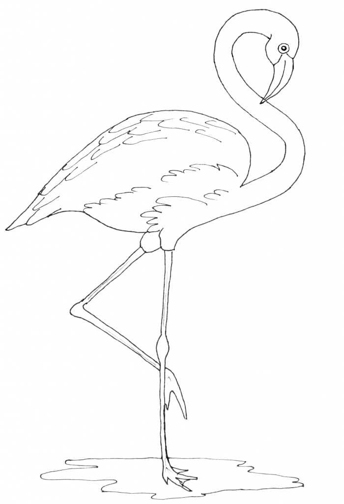 flamingo patterns