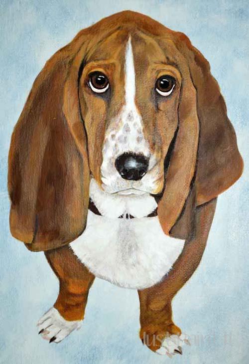 bassett hound portrait