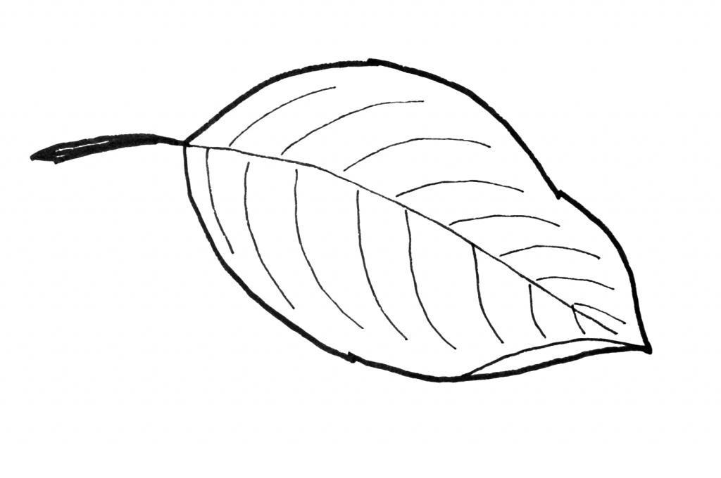 dogwood leaf pattern