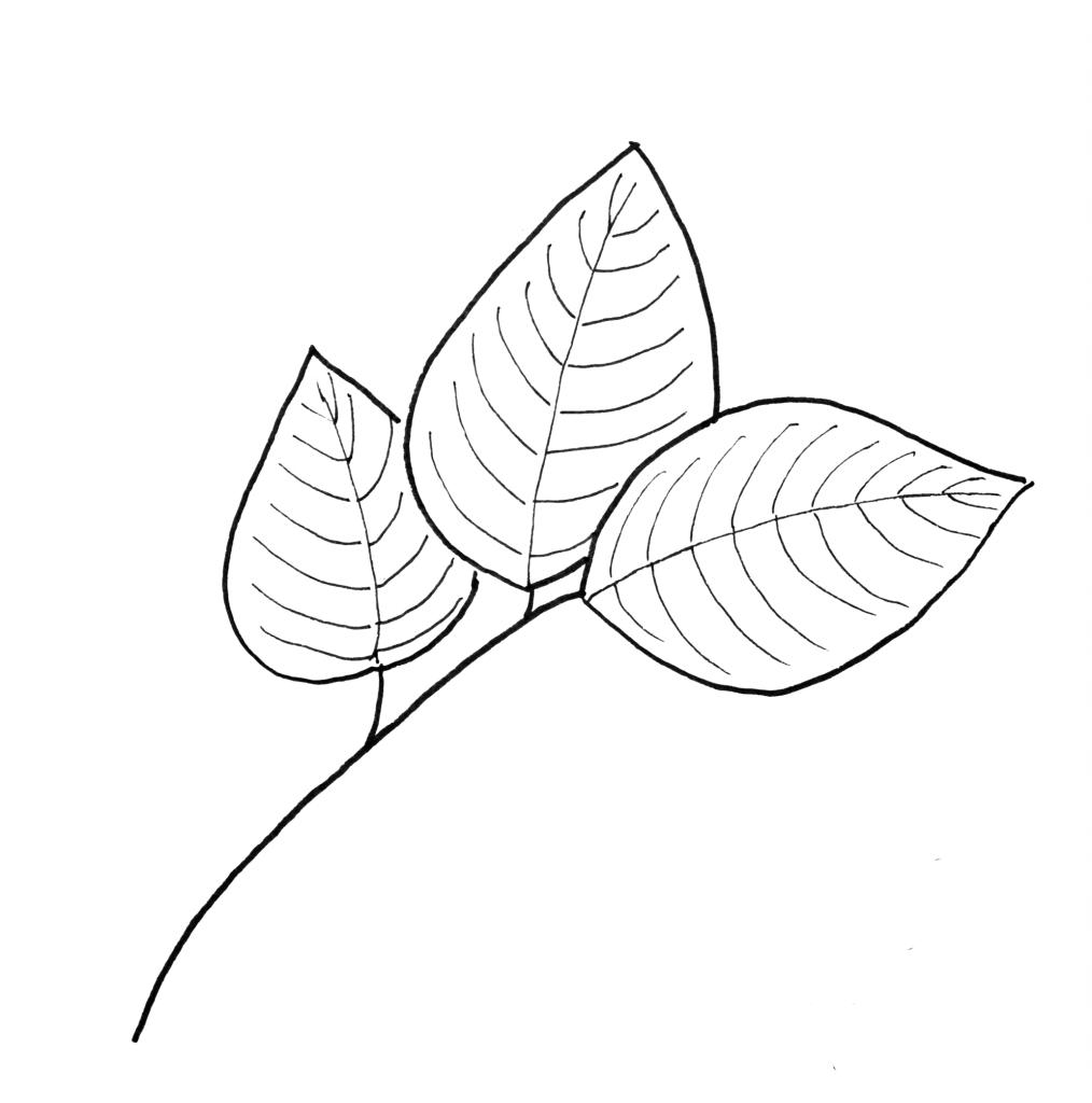 dogwood leaves pattern