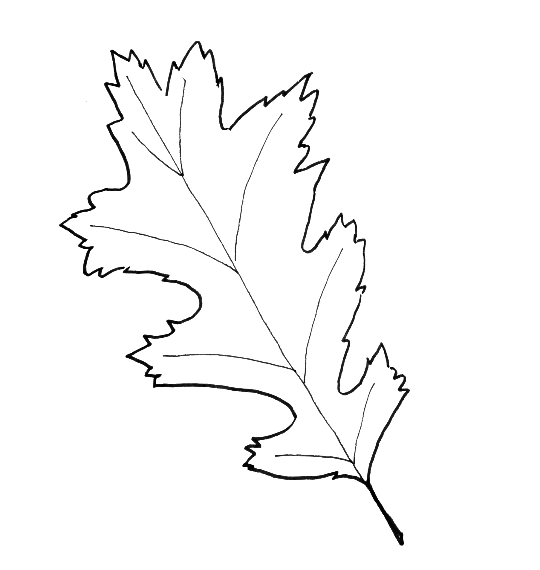 It is a graphic of Universal Fall Leaf Printable