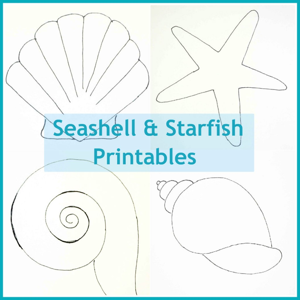 Seashell Patterns