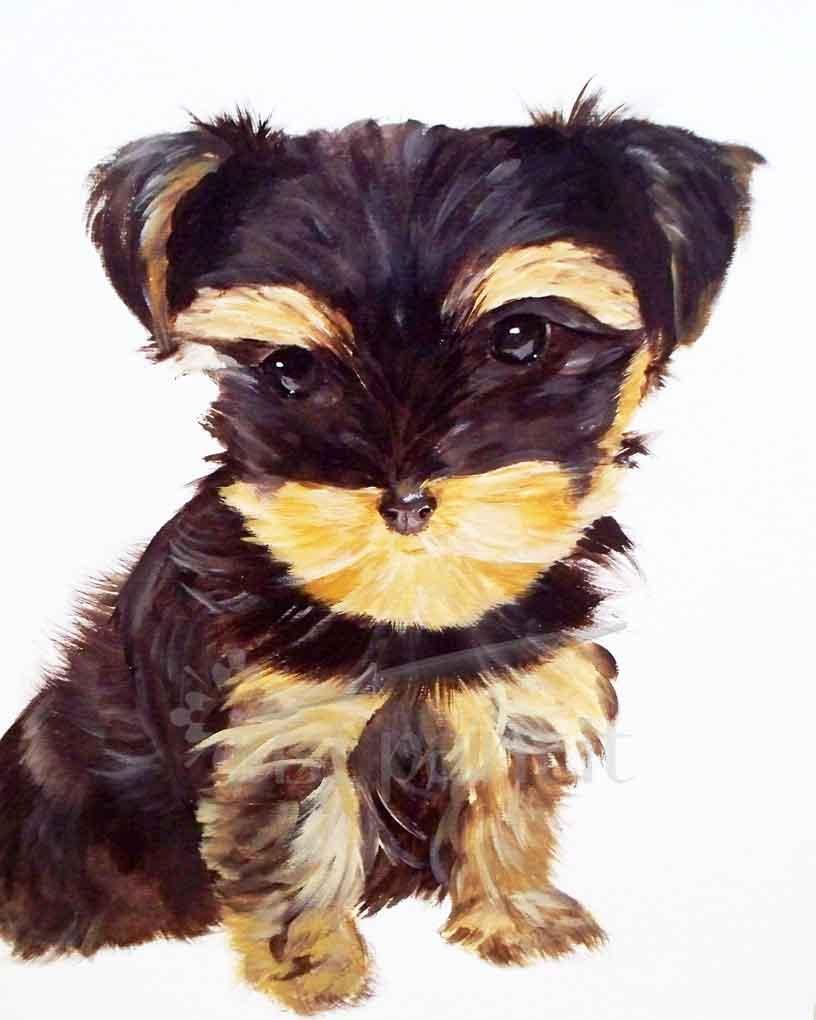 Yorkie-Pup