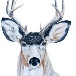 buck-in-pencil