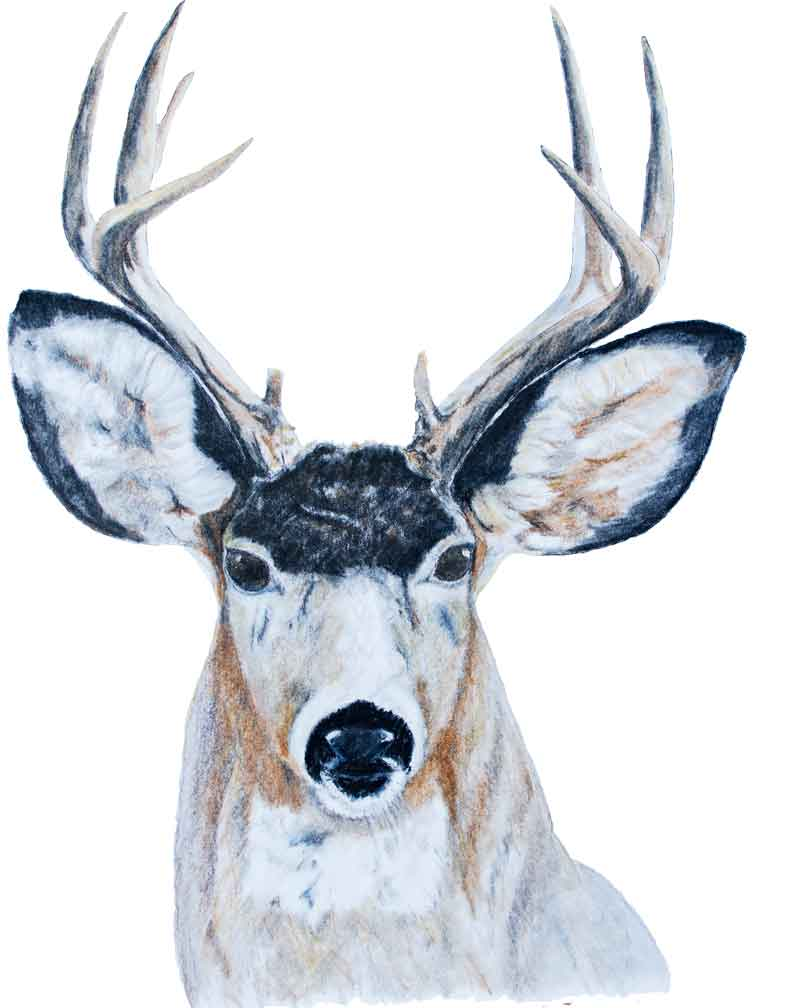 buck-in-pencil