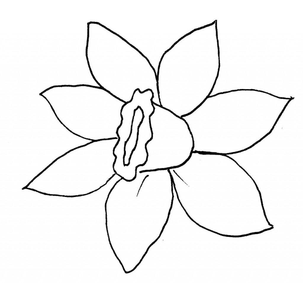 daffodil-pattern