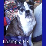 Losing a Pet – My Journey Through Depression and Anxiety