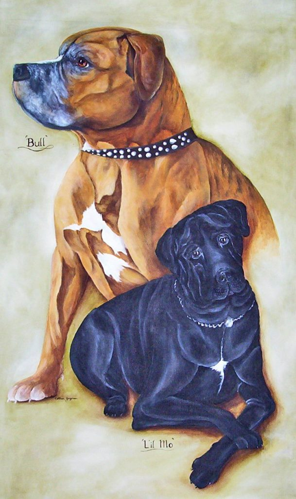 bull mastiff pet portrait