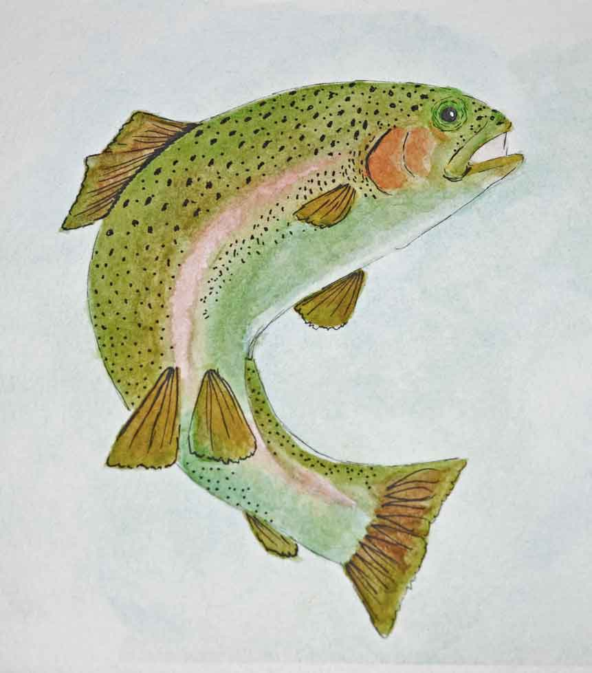 rainbow-trout-painting