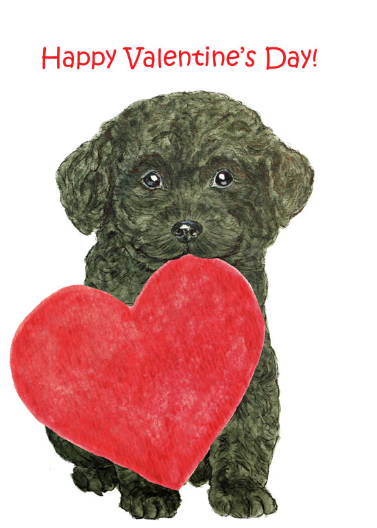 Valentine-Poodle-pup