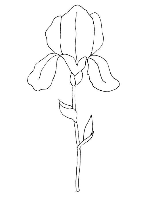 iris-pattern