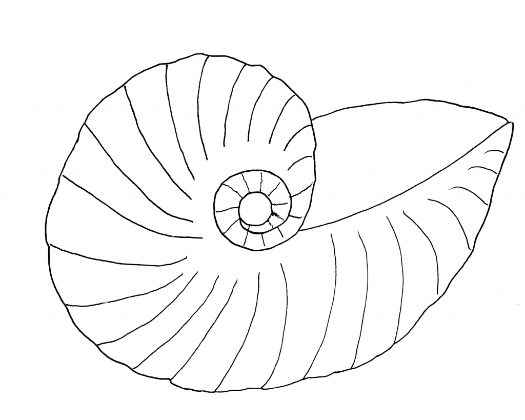 nautilus-seashell-pattern
