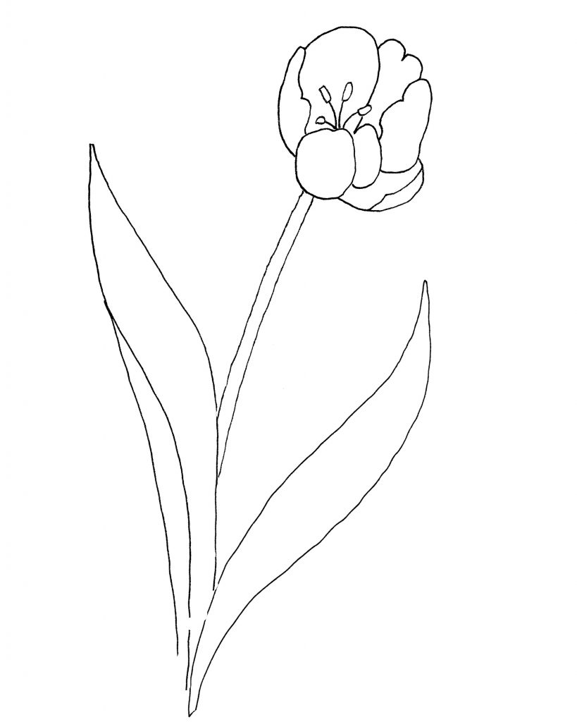 tulip-pattern