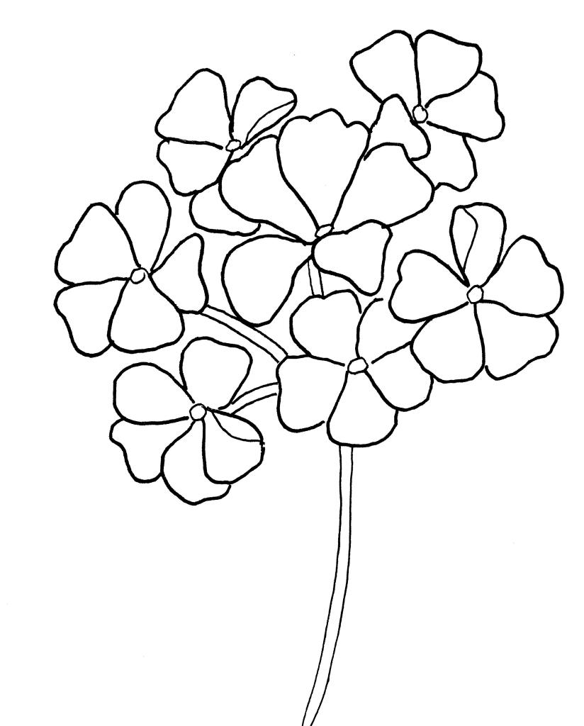 geranium-pattern