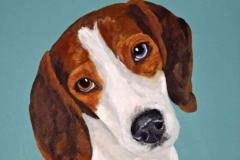 Beagle Pet Portrait