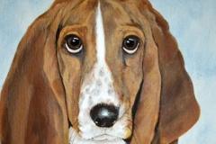 Basset Hound Pet Portrait