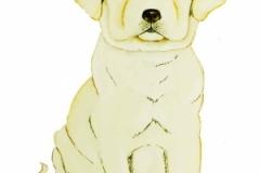 Lab Puppy Pet Portrait