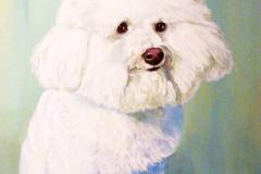 Bichon Frise Pet Portrait