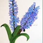 How to Paint Hyacinths