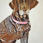 German shorthaired pointer portrait