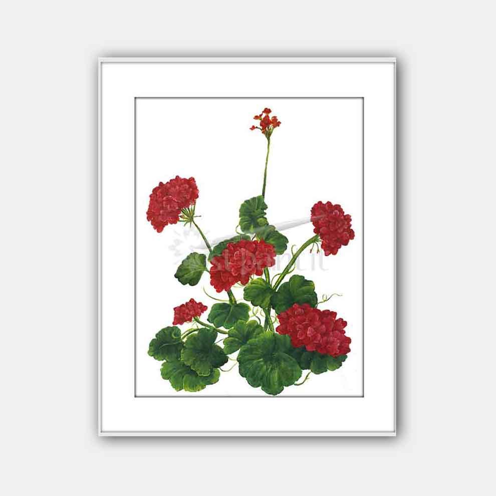 Red-Geraniums-art-print